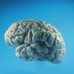 A krónikus derékfájdalom az agyi fájdalomérzékeléstől is függ