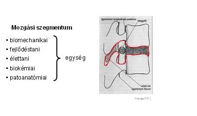 Spondylosis lumbalis