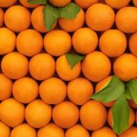 Gerinces_c-vitamin