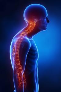 A kyphosis púposságot, a gerinc háti hajlatának megtörését jelenti.