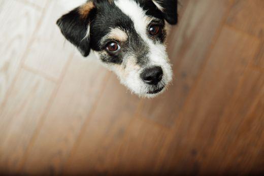 gerinces_állat-terápia